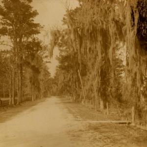 Shell Road - Street scene.jpg